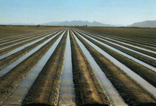 furrow_irrigation (1)