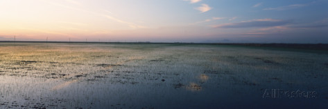 panoramic-images-flooded-rice-paddy-fields-central-valley-california-usa